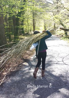 each bundle of willow was carried through Slieve Gullion forest for the willow sculpture